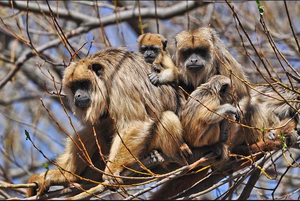 El fuego avanza por «tío Mayu» y rodea la reserva de «monos Carayá». Domingo  complicado